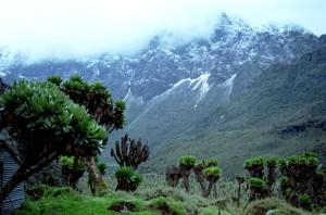 ruwenzori-mountain-uganda